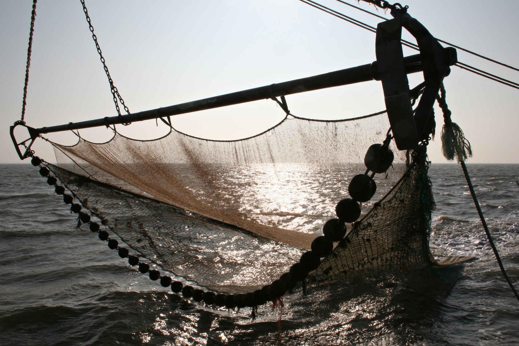 Factores esenciales en la calidad del pescado congelado